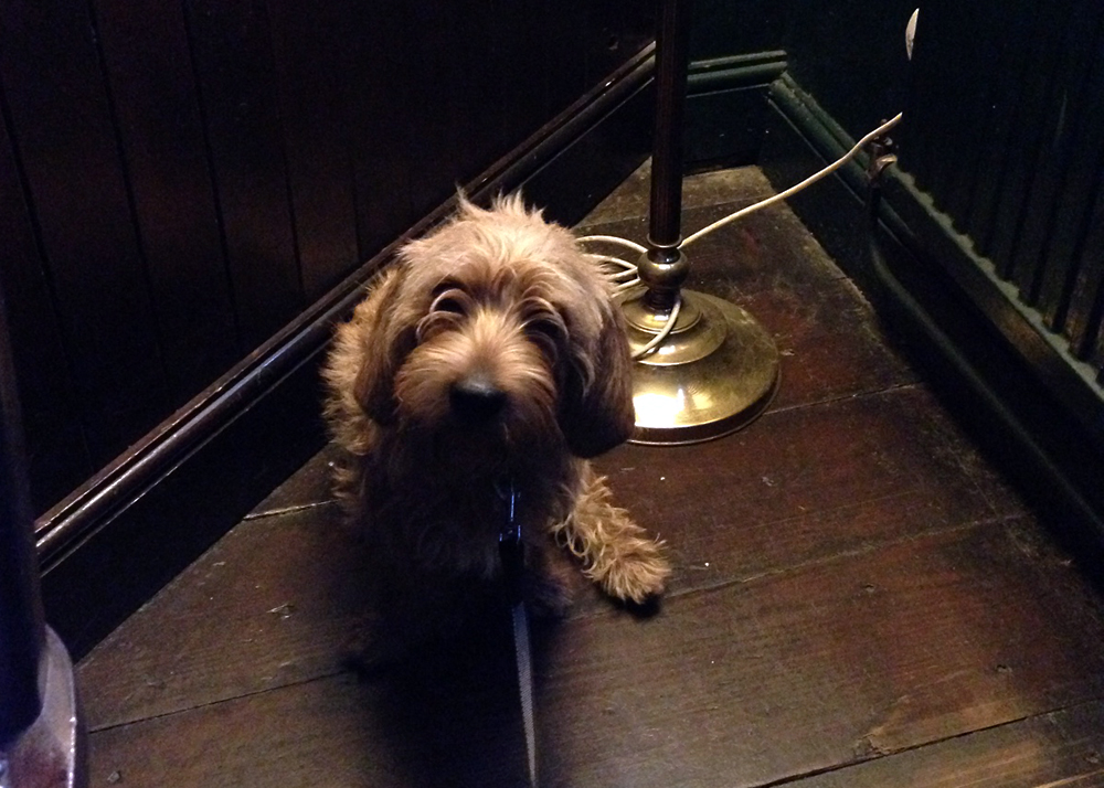 Amber at the Three Stags