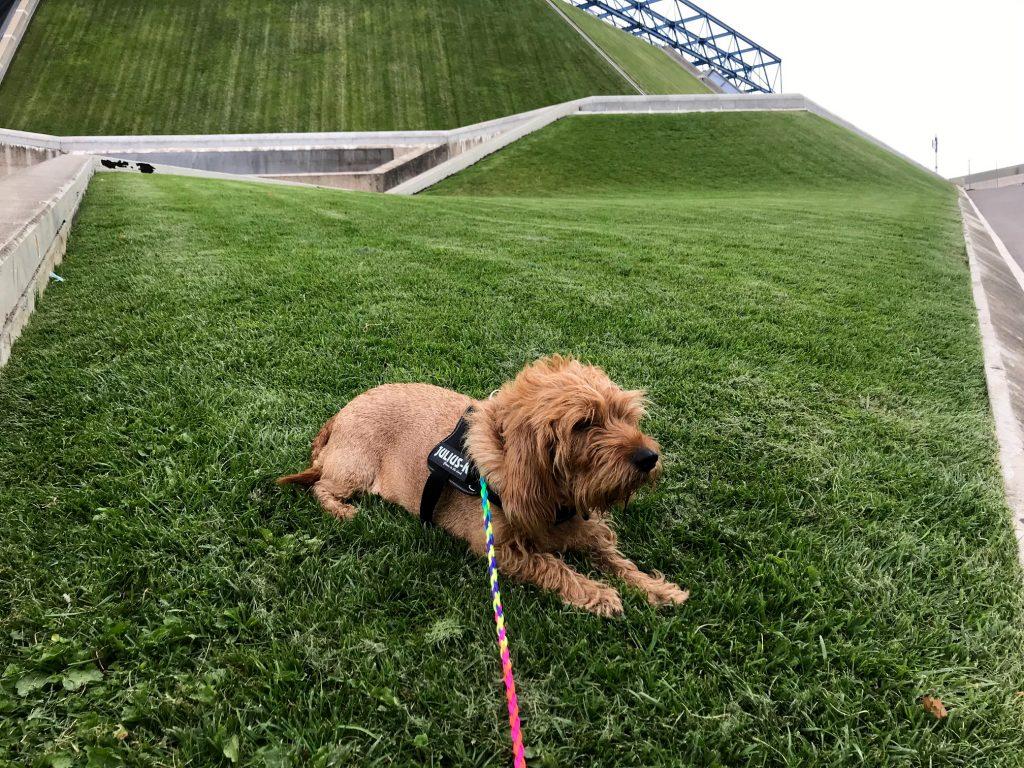 Amber on grass