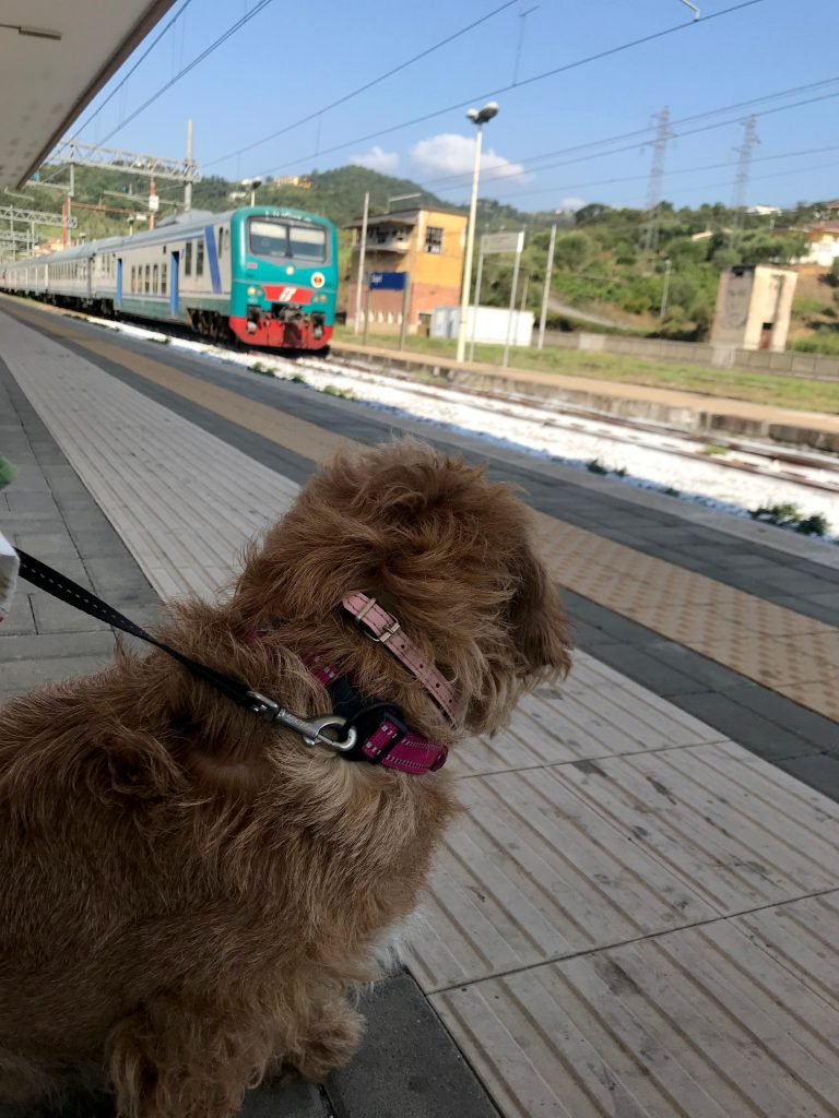 Amber looking towards a train arriving in the Sapri station