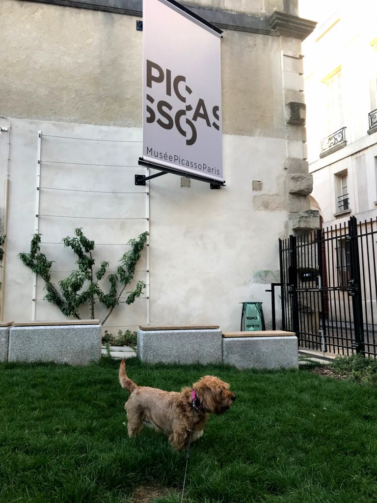 AMber in one of the few dog friendy parcs of paris